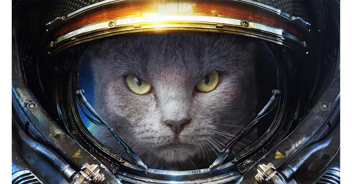 Katzenjammer: 40 Cats
